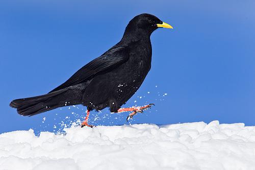 Monatsfoto: Carsten Braun - Januar 2012