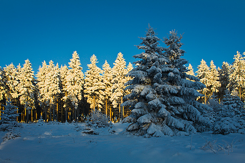 Monatsfoto: Hans-Martin Braun - Dezember 2012