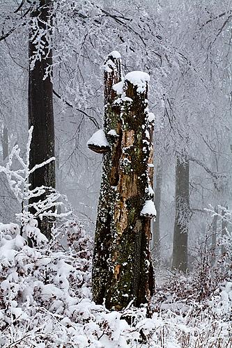 Monatsfoto: Hans-Martin Braun - Januar 2013