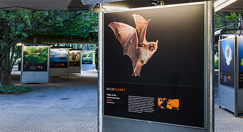 Ausstellung Wild Planet