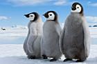 Pinguine, Thorsten Milse