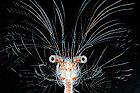 Tiefsee-Plankton, Foto: Solvin Zankl
